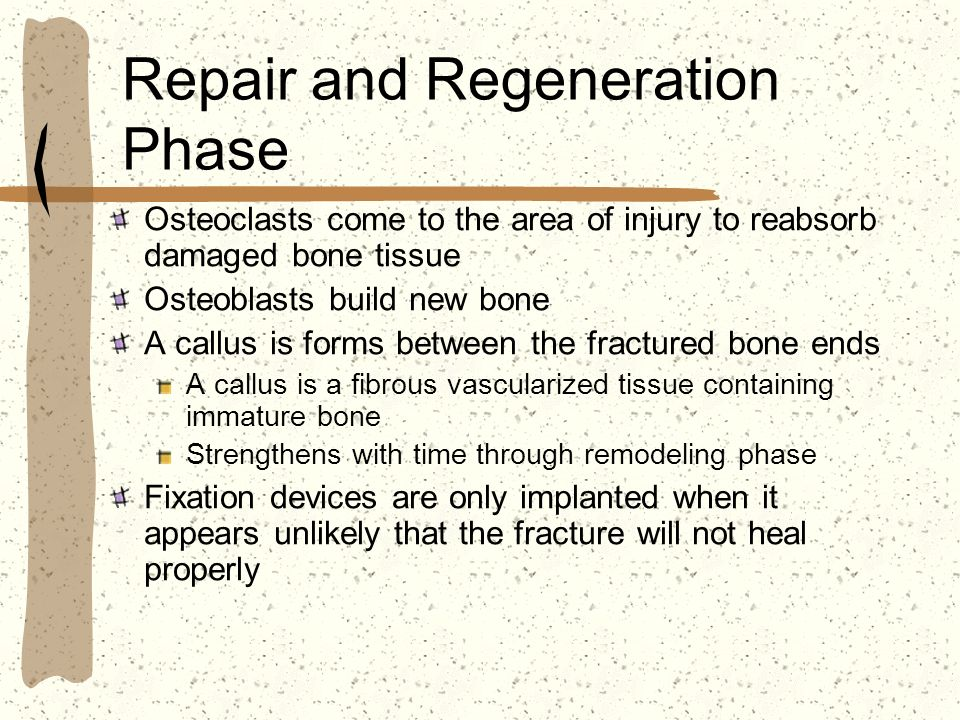 Repair and Regeneration Phase