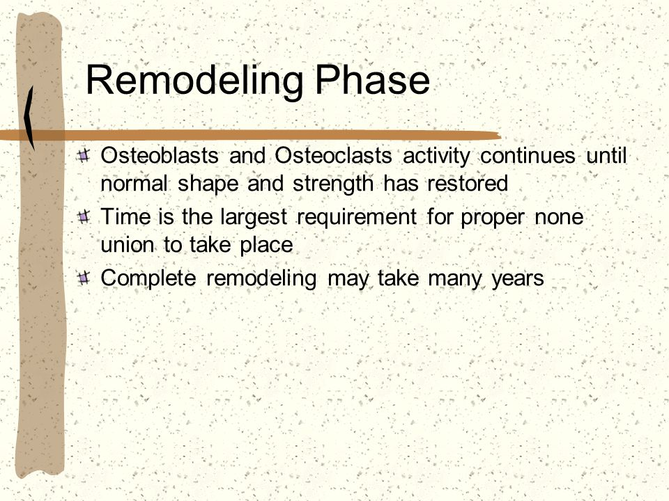 Remodeling Phase Osteoblasts and Osteoclasts activity continues until normal shape and strength has restored.