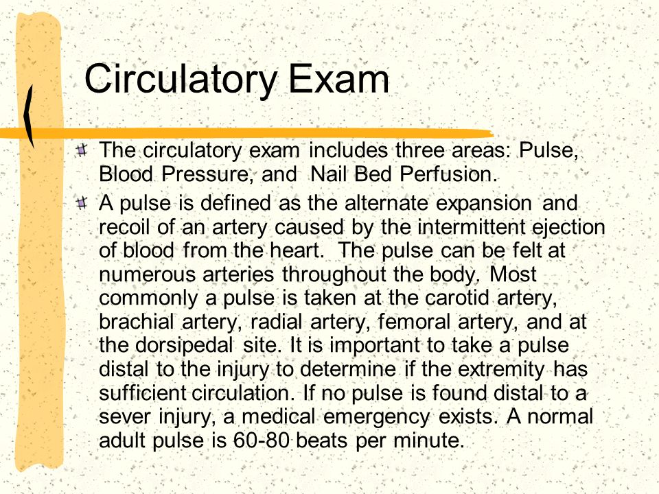 Circulatory Exam The circulatory exam includes three areas: Pulse, Blood Pressure, and Nail Bed Perfusion.