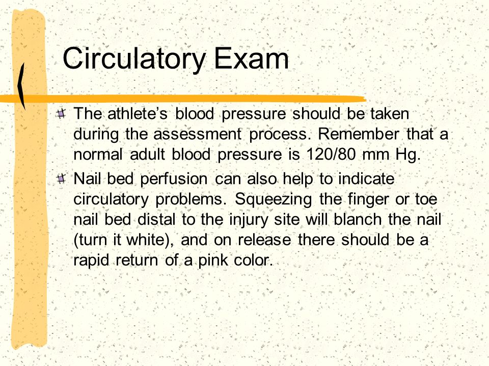 Circulatory Exam