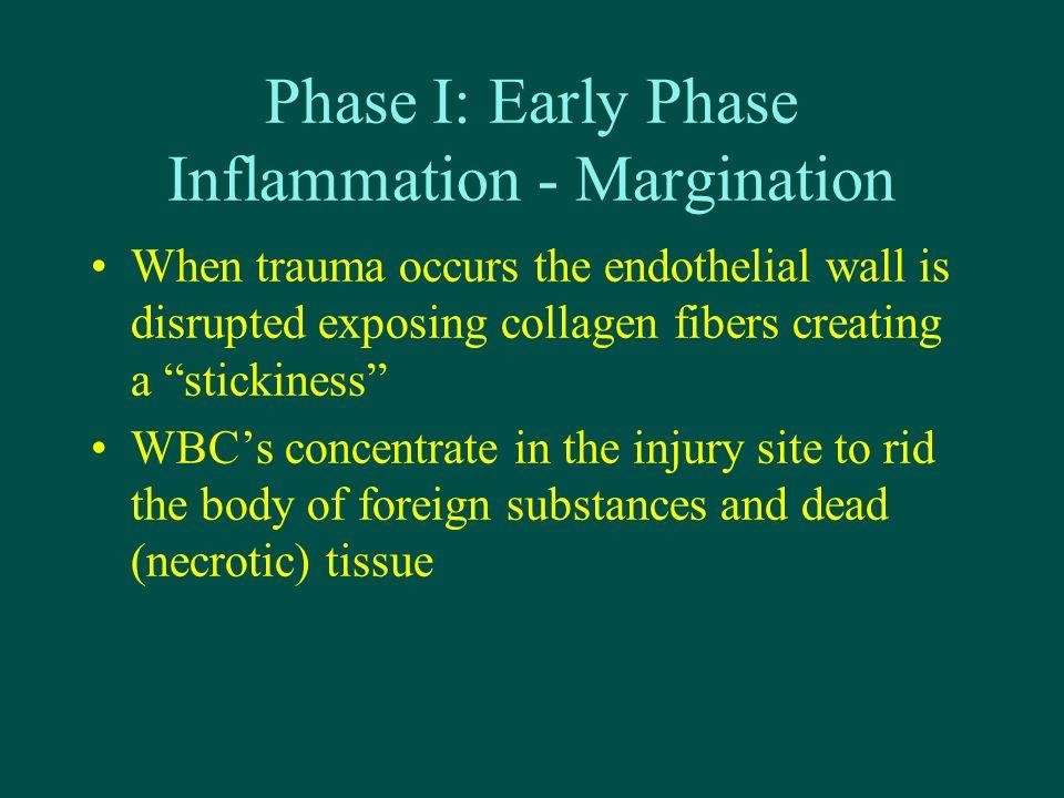 Phase I: Early Phase Inflammation - Margination