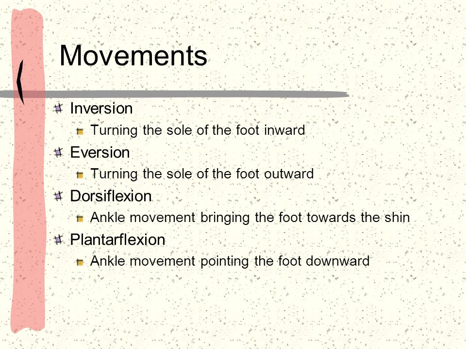 Movements Inversion Eversion Dorsiflexion Plantarflexion