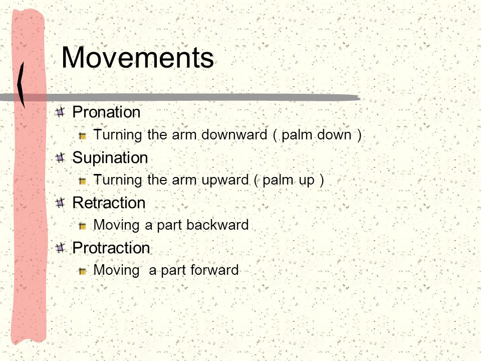 Movements Pronation Supination Retraction Protraction