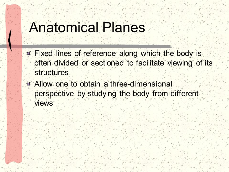 Anatomical PlanesFixed lines of reference along which the body is often divided or sectioned to facilitate viewing of its structures.
