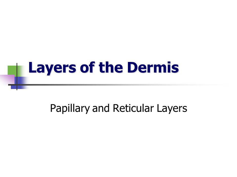 Papillary and Reticular Layers