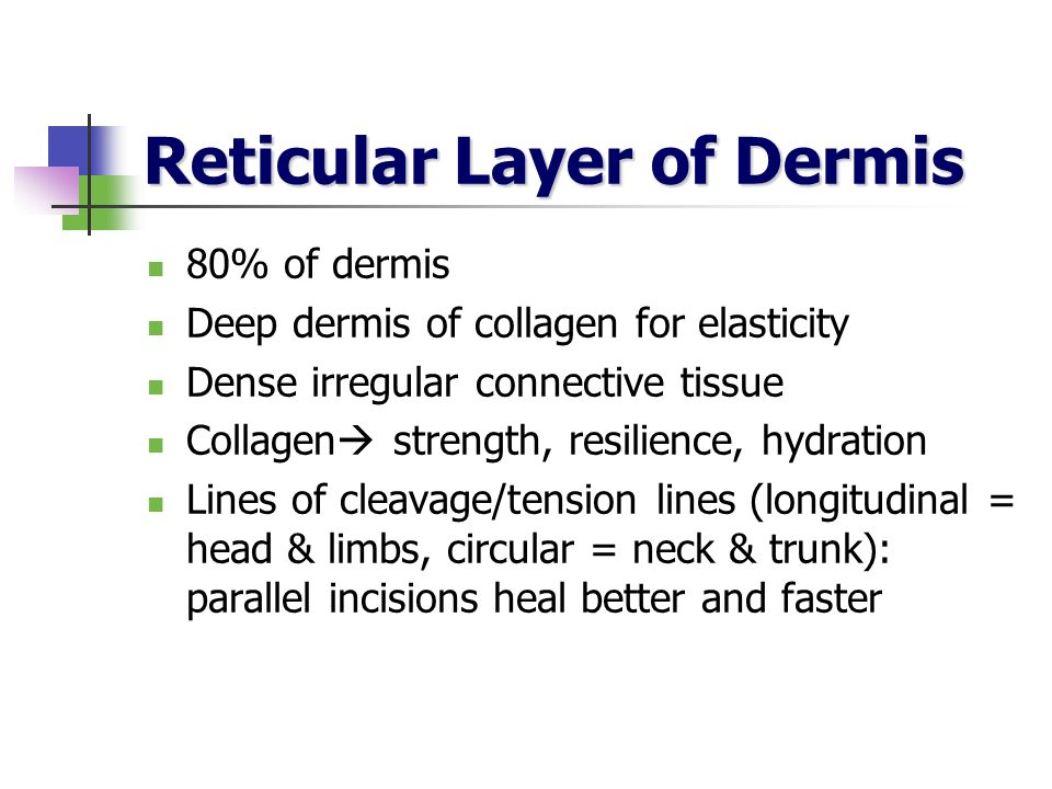 Reticular Layer of Dermis