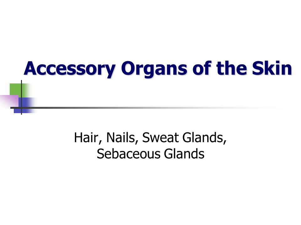 Accessory Organs of the Skin
