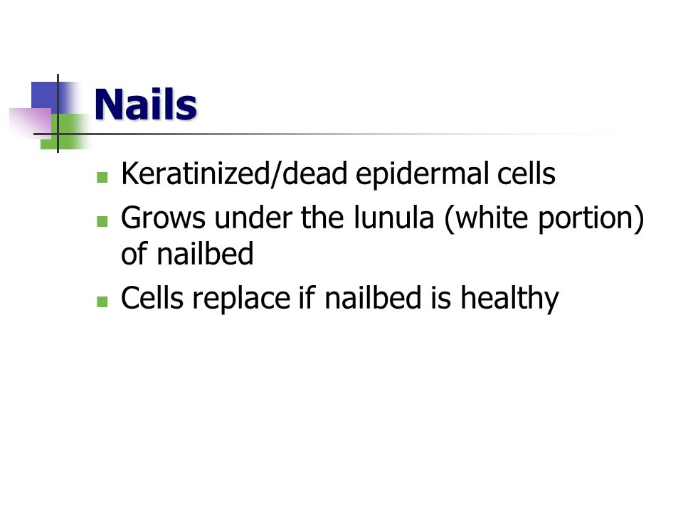 Nails Keratinized/dead epidermal cells