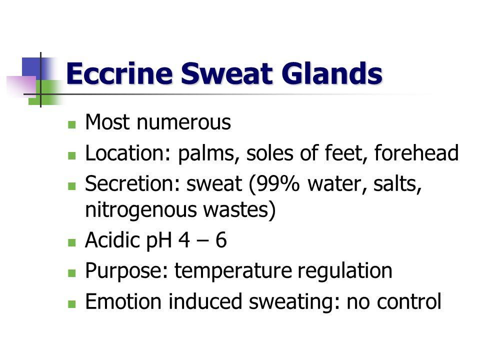 Eccrine Sweat Glands Most numerous