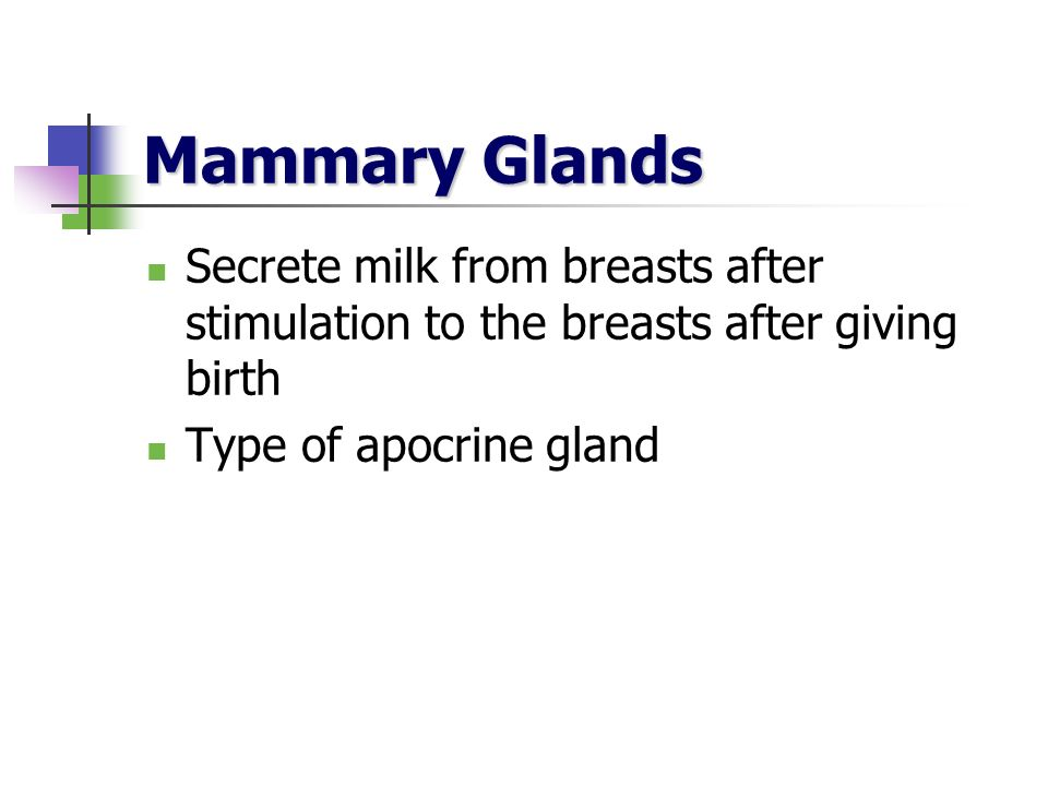 Mammary Glands Secrete milk from breasts after stimulation to the breasts after giving birth.