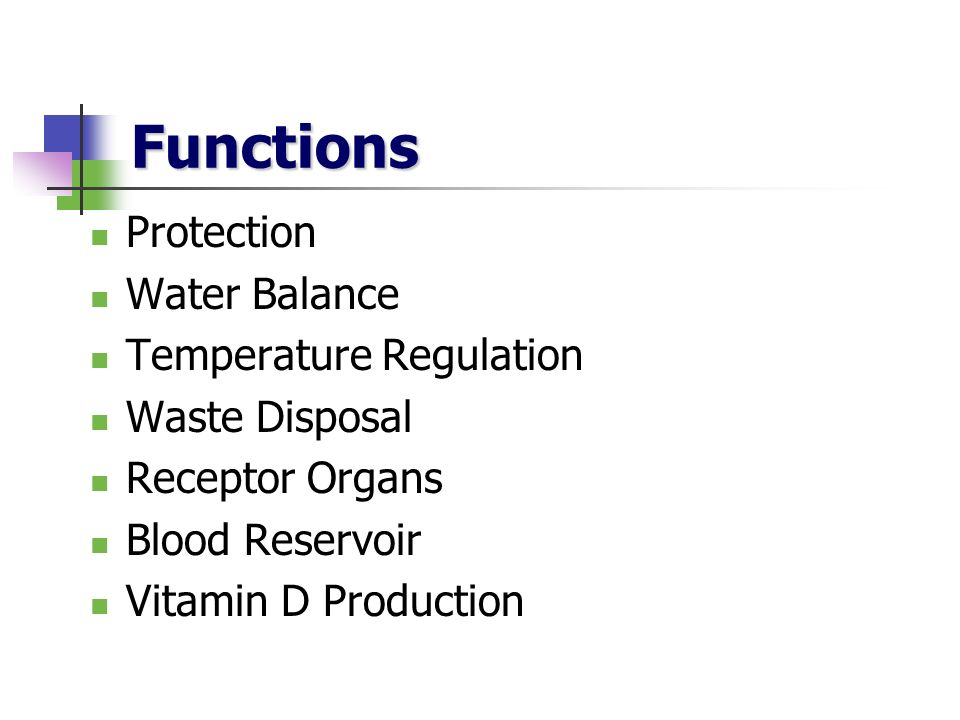 Functions Protection Water Balance Temperature Regulation