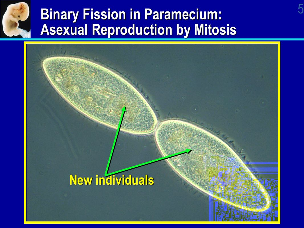 AP Biology Cellular Division Cell Reproduction. - ppt video online ...