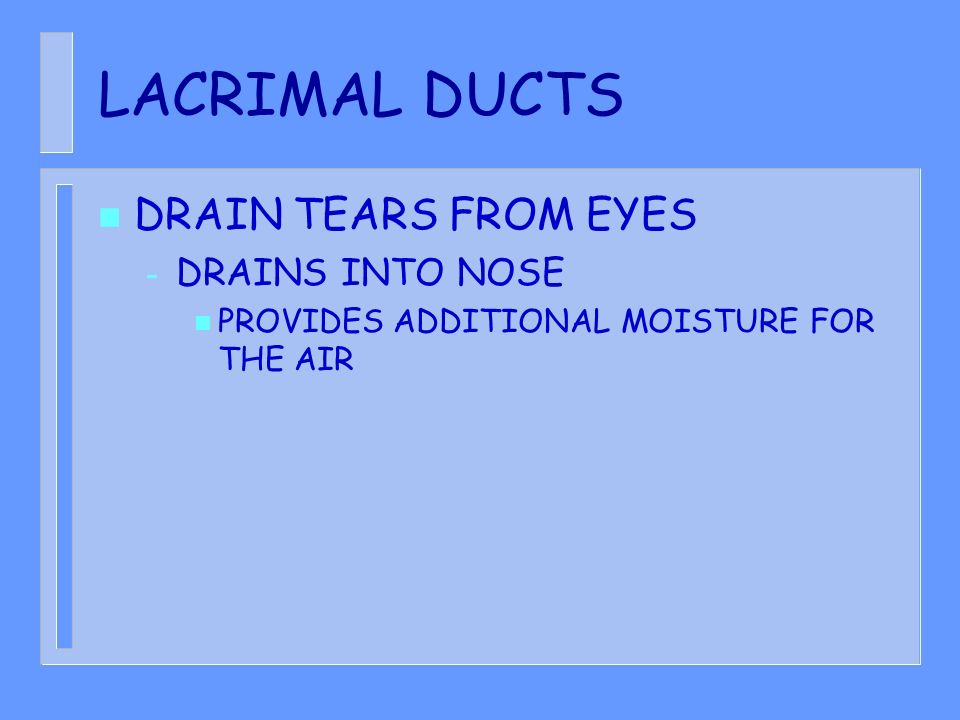 LACRIMAL DUCTS DRAIN TEARS FROM EYES DRAINS INTO NOSE