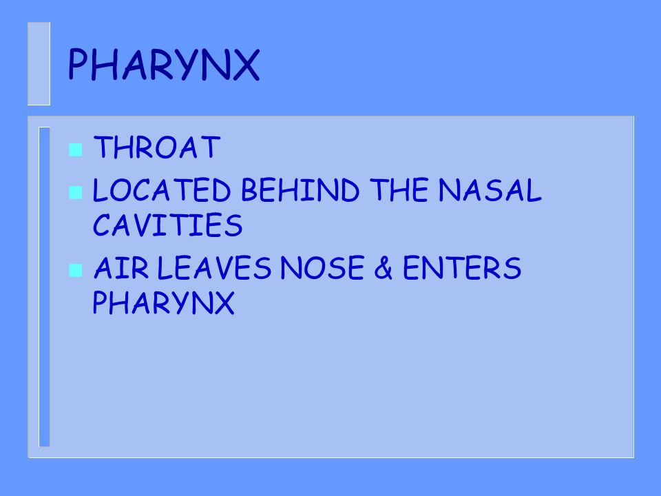 PHARYNX THROAT LOCATED BEHIND THE NASAL CAVITIES