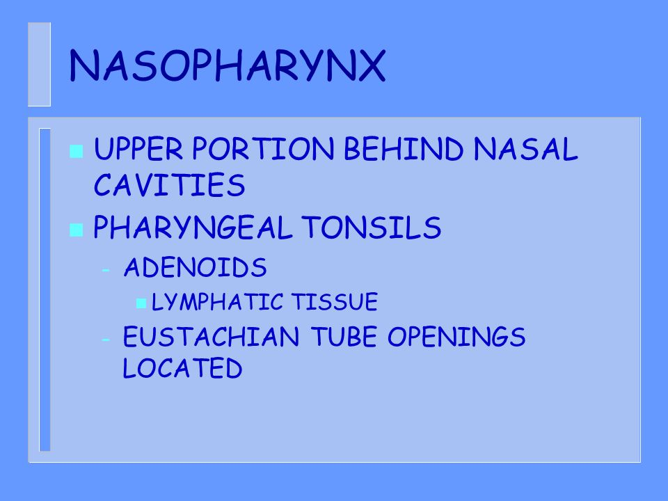 NASOPHARYNX UPPER PORTION BEHIND NASAL CAVITIES PHARYNGEAL TONSILS