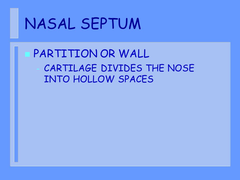 NASAL SEPTUM PARTITION OR WALL