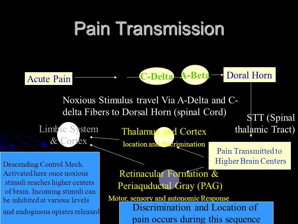 Pain Transmission A-Beta C-Delta Doral Horn Acute Pain Acute Pain