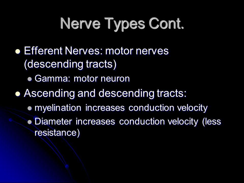 Nerve Types Cont. Efferent Nerves: motor nerves (descending tracts)