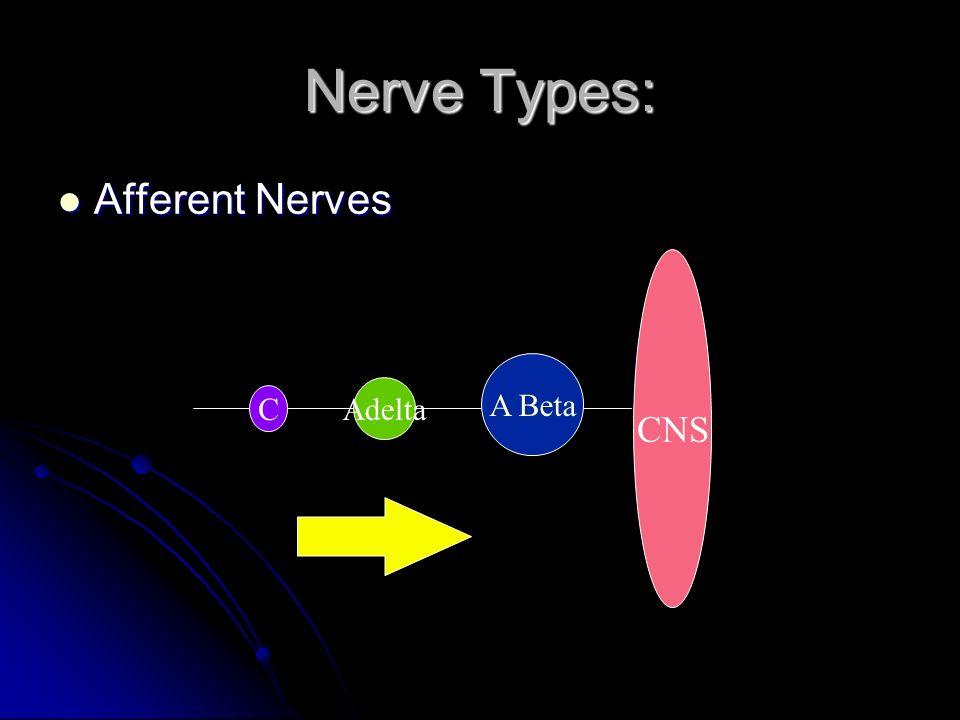 Nerve Types: Afferent Nerves CNS A Beta Adelta C
