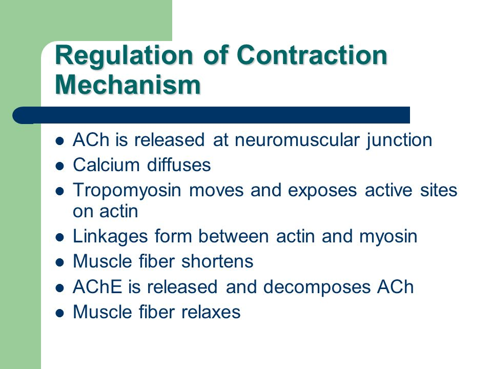 Regulation of Contraction Mechanism