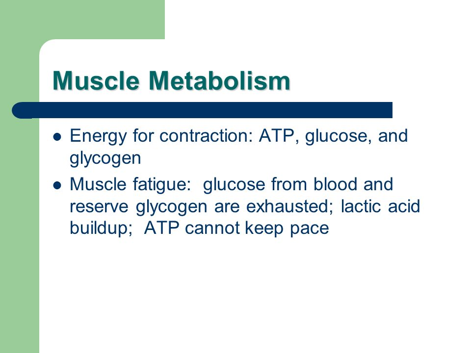 Muscle Metabolism Energy for contraction: ATP, glucose, and glycogen