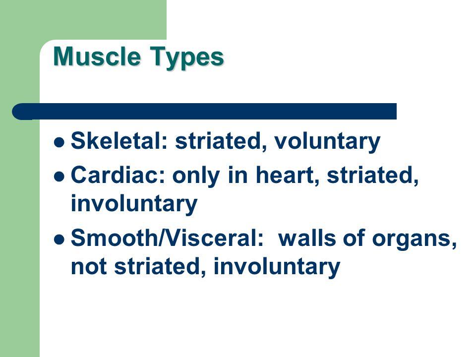 Muscle Types Skeletal: striated, voluntary