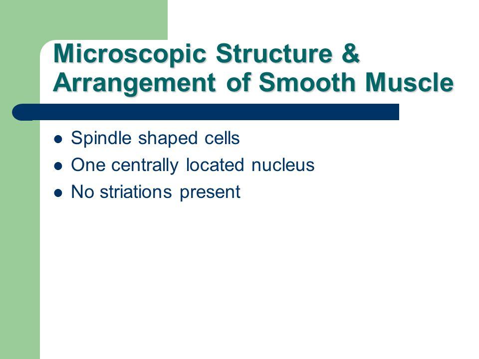 Microscopic Structure & Arrangement of Smooth Muscle