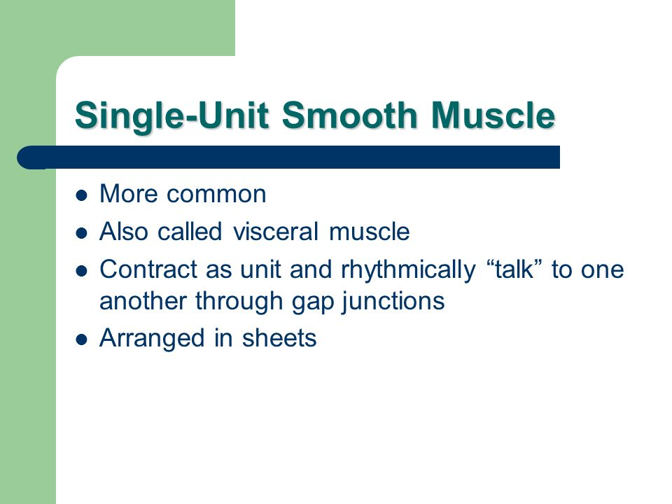 Single-Unit Smooth Muscle