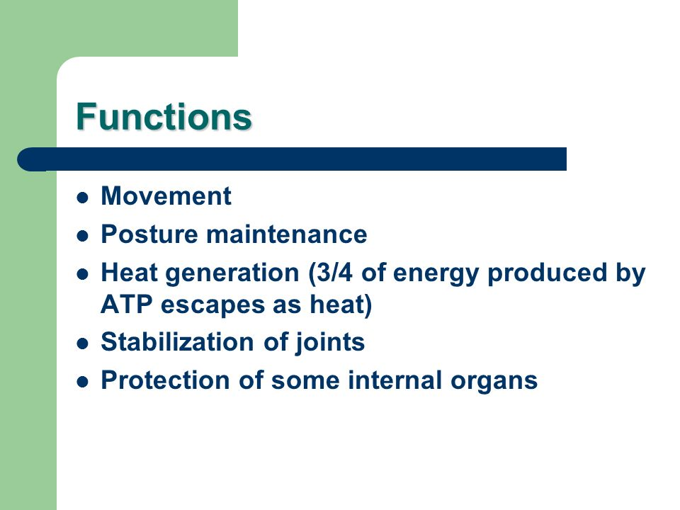Functions Movement Posture maintenance