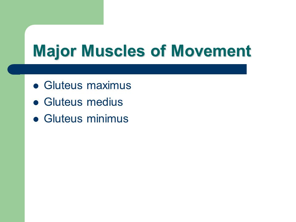 Major Muscles of Movement