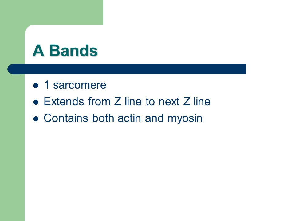 A Bands 1 sarcomere Extends from Z line to next Z line