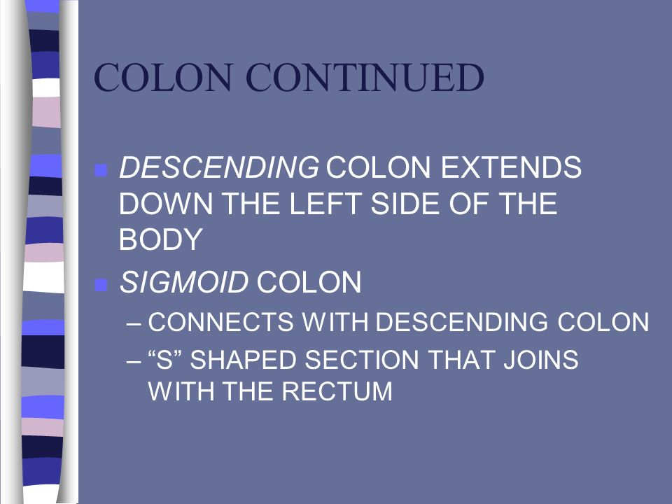 COLON CONTINUED DESCENDING COLON EXTENDS DOWN THE LEFT SIDE OF THE BODY. SIGMOID COLON. CONNECTS WITH DESCENDING COLON.