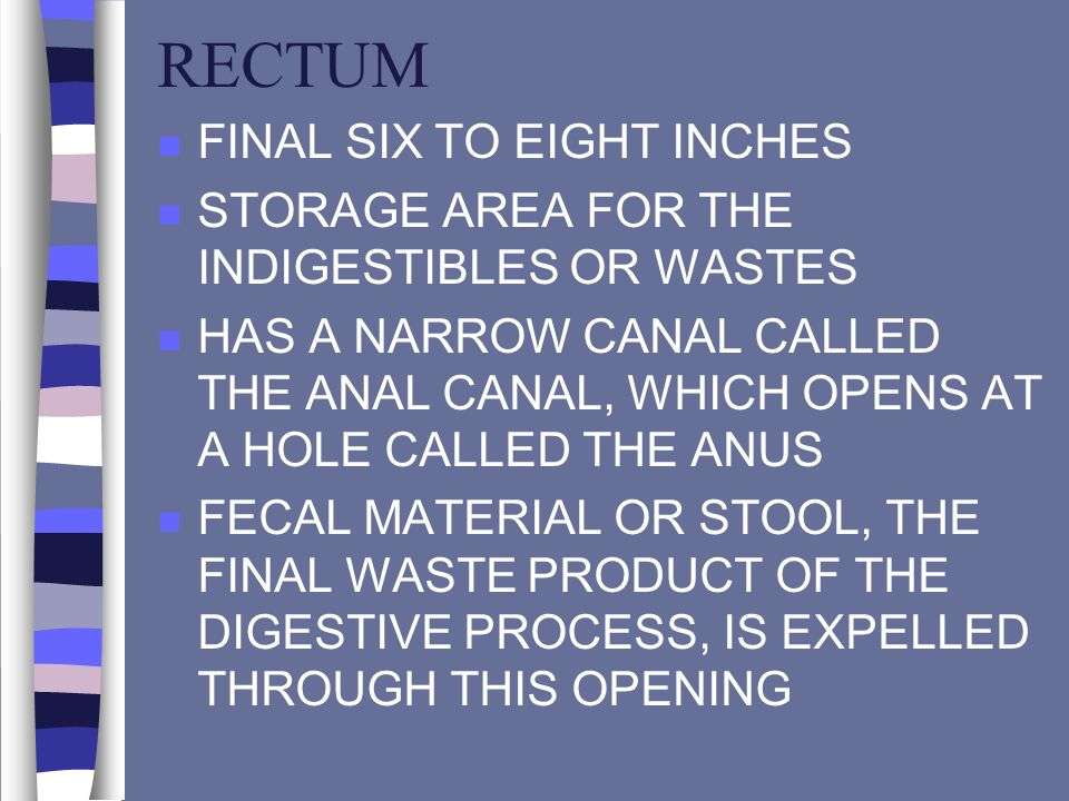 RECTUM FINAL SIX TO EIGHT INCHES