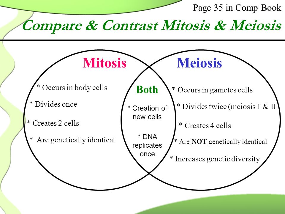 Compare contrast meiosis mitosis essay compare and contrast the sample essay on comparison between mitosis and meiosis ccuart Choice Image