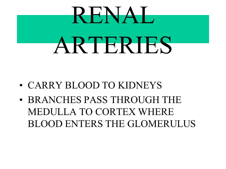RENAL ARTERIES CARRY BLOOD TO KIDNEYS