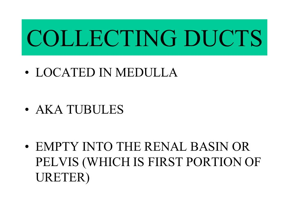COLLECTING DUCTS LOCATED IN MEDULLA AKA TUBULES
