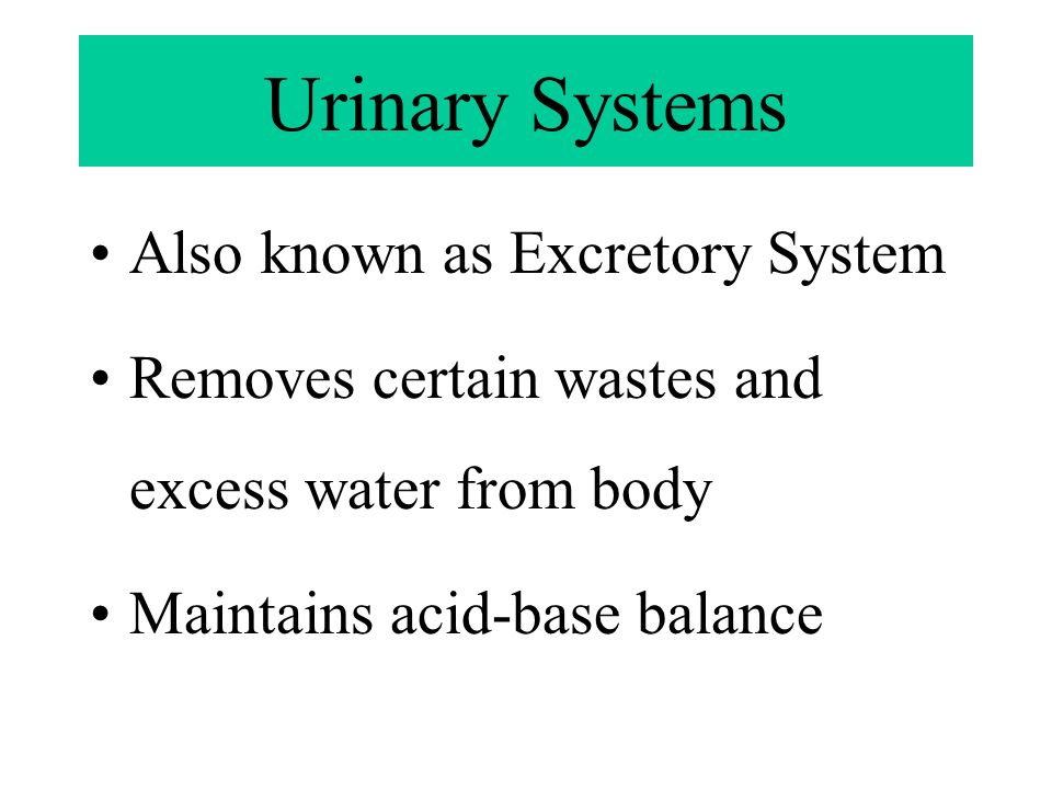 Urinary Systems Also known as Excretory System