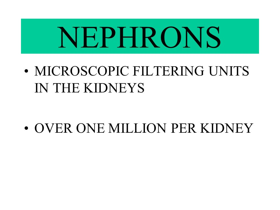 NEPHRONS MICROSCOPIC FILTERING UNITS IN THE KIDNEYS