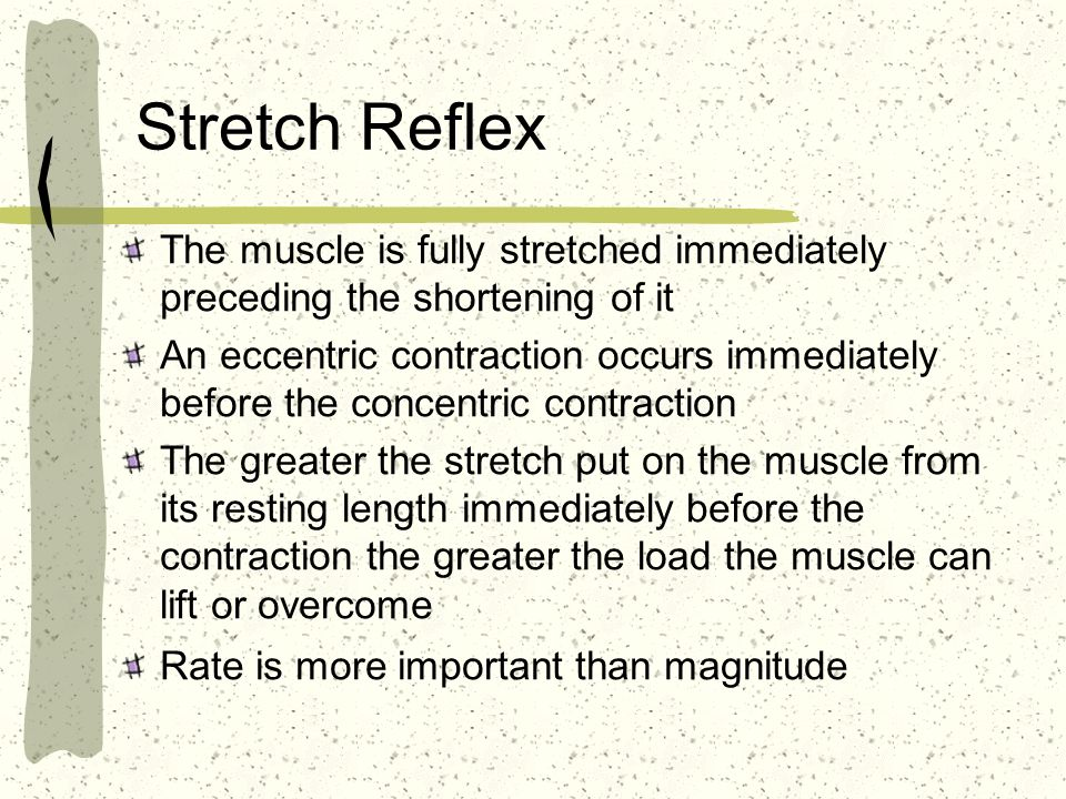 Stretch Reflex The muscle is fully stretched immediately preceding the shortening of it.