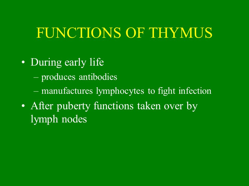 FUNCTIONS OF THYMUS During early life