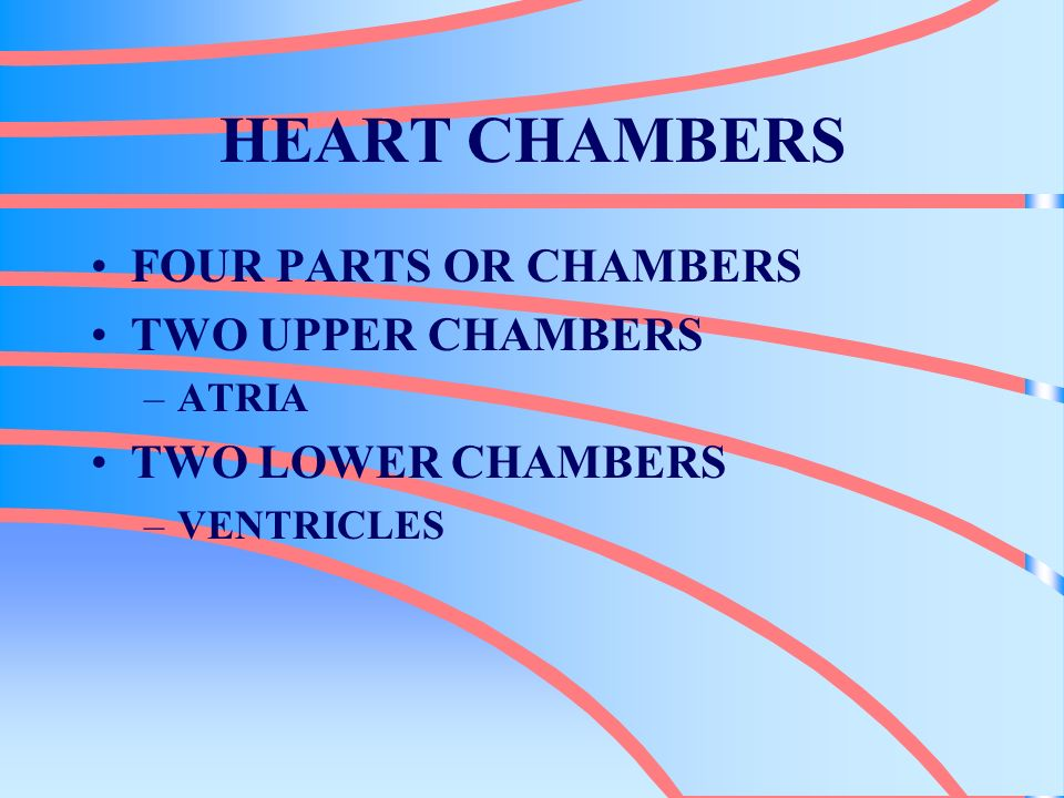 HEART CHAMBERS FOUR PARTS OR CHAMBERS TWO UPPER CHAMBERS