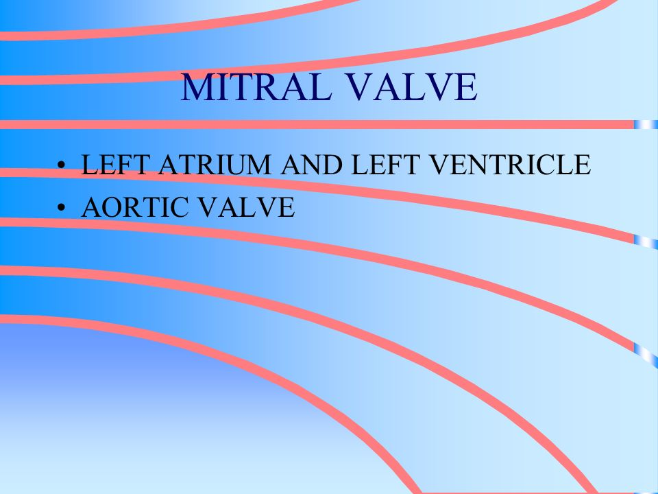 MITRAL VALVE LEFT ATRIUM AND LEFT VENTRICLE AORTIC VALVE