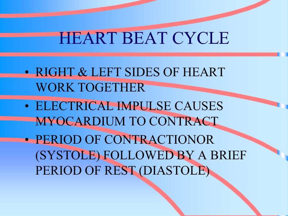 HEART BEAT CYCLE RIGHT & LEFT SIDES OF HEART WORK TOGETHER