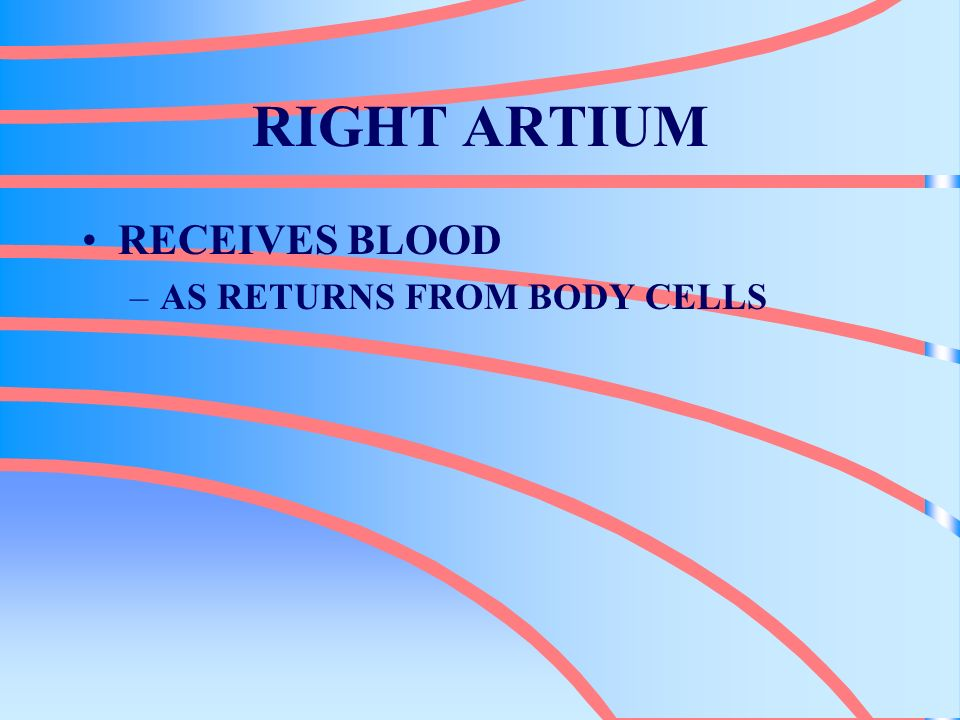RIGHT ARTIUM RECEIVES BLOOD AS RETURNS FROM BODY CELLS