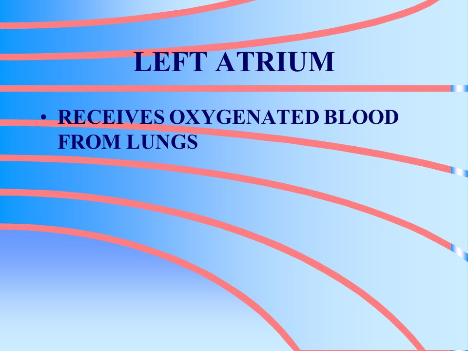 LEFT ATRIUM RECEIVES OXYGENATED BLOOD FROM LUNGS