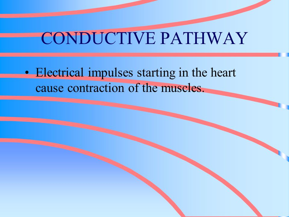 CONDUCTIVE PATHWAY Electrical impulses starting in the heart cause contraction of the muscles.
