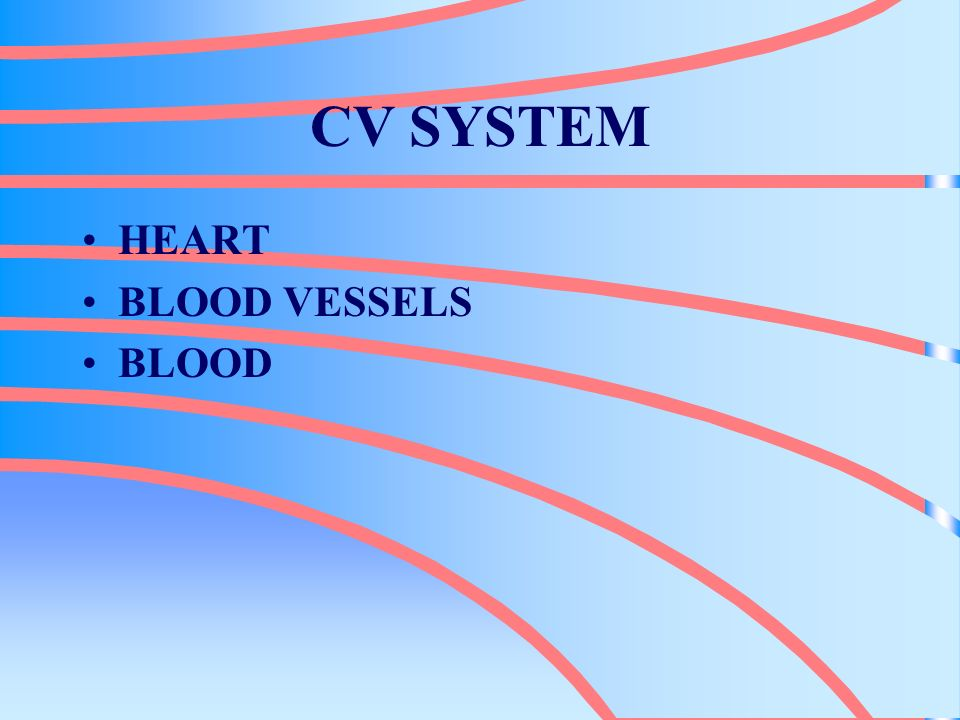 CV SYSTEM HEART BLOOD VESSELS BLOOD