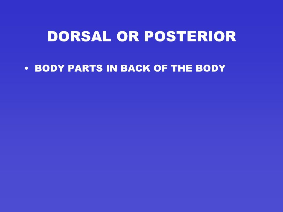 DORSAL OR POSTERIOR BODY PARTS IN BACK OF THE BODY