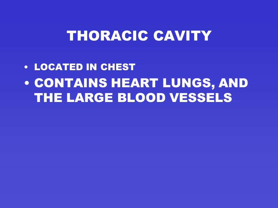 THORACIC CAVITY CONTAINS HEART LUNGS, AND THE LARGE BLOOD VESSELS