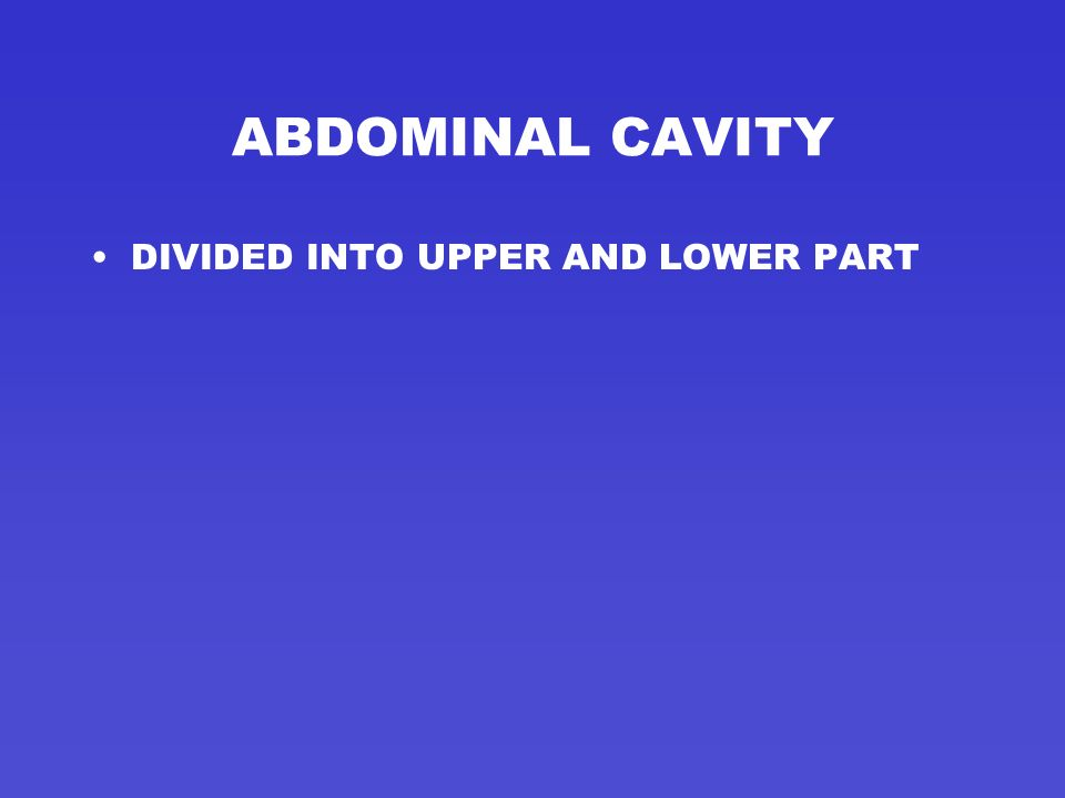 ABDOMINAL CAVITY DIVIDED INTO UPPER AND LOWER PART